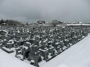 雪景色です。