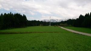 牧草の草原